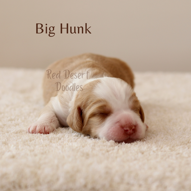 Big Hunk.png