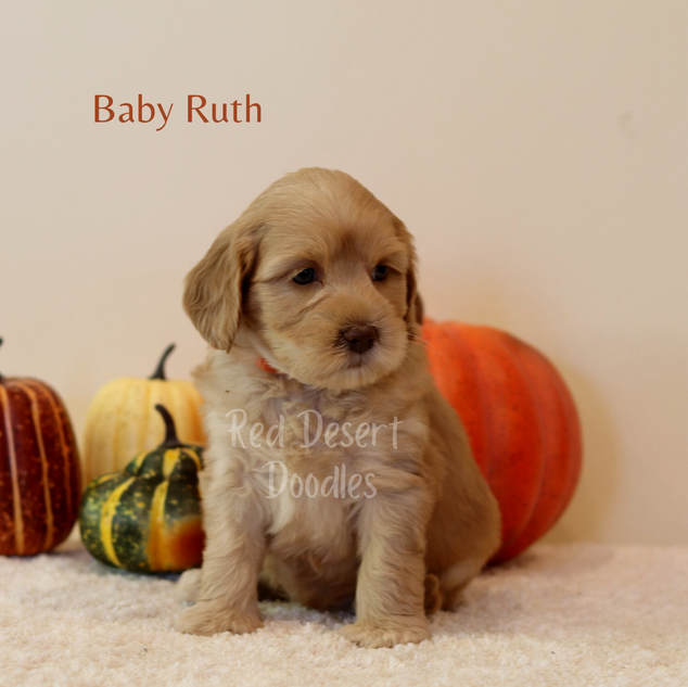 Baby Ruth.png