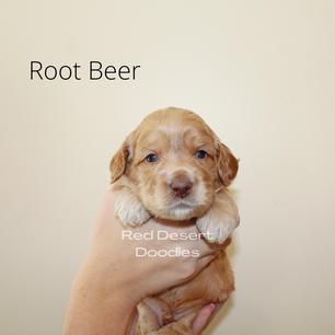 Root Beer.png