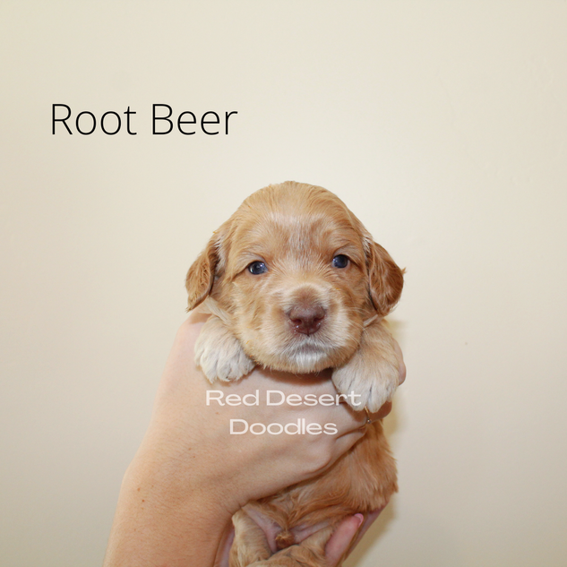 Root Beer.png