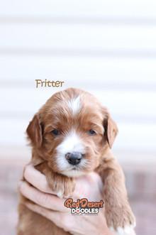 Fritter 2.jpg