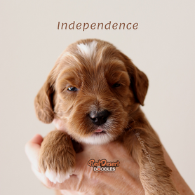 Independence.png