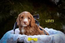 Honey 3.jpg
