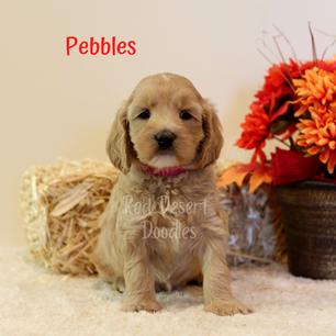Pebbles.png