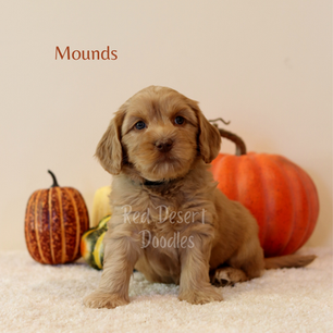 Mounds.png