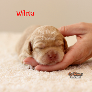 Wilma.png