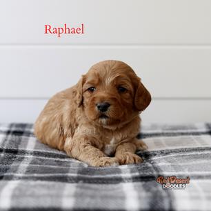 Raphael.png