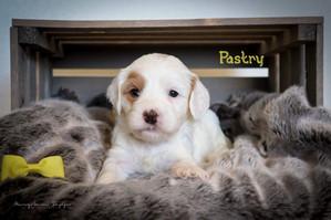Pastry 1.jpg
