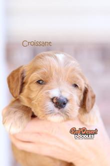 Croissant 2.jpg