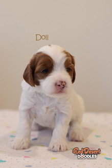Doll 2.jpg
