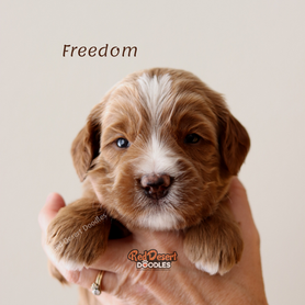 Freedom2.png