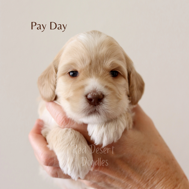 Pay Day.png