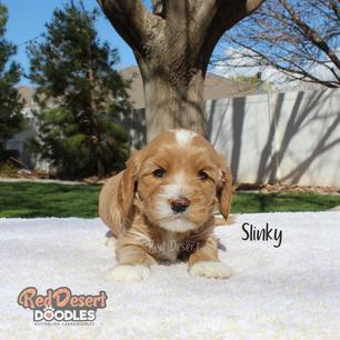 Slinky.png