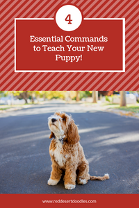 Four Essential Commands to Teach Your New Puppy | Red Desert Doodles Breeders