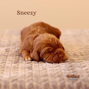 Sneezy.png
