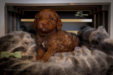 Romeo 1.jpg
