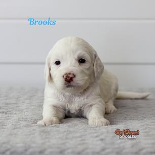 Brooks.png
