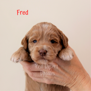 Fred.png