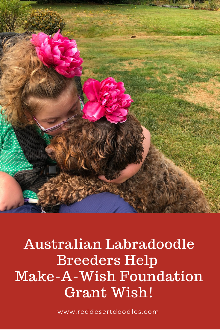 Australian Labradoodle Breeders Help Make-A-Wish Foundation Grant Wish! | Red Desert Doodles Breeders