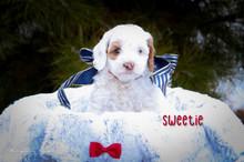 Sweetie 4.jpg
