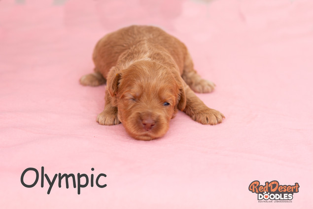 Olympic Week 2.jpg