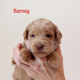 Barney.png