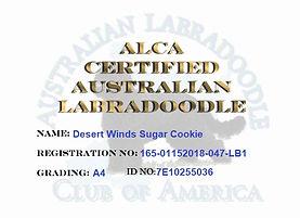 Desert Winds Sugar Cookie.jpg
