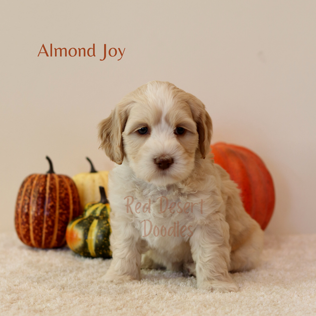 Almond Joy.png