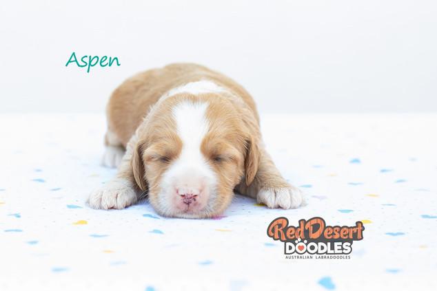 Aspen 1.jpg