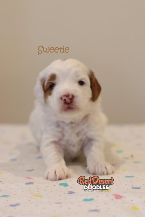 Sweetie 2.jpg