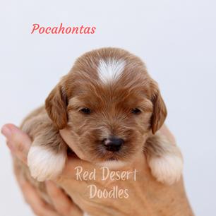 Pocahontas.png