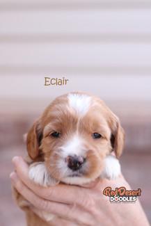 Eclair 2.jpg