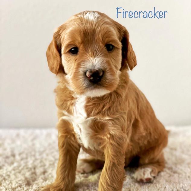 Firecracker.JPG