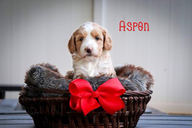 Aspen7.jpg