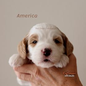 America.png