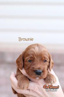 Brownie 2.jpg