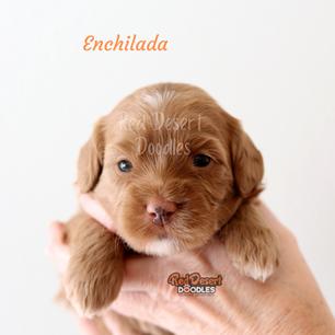 Enchilada.png