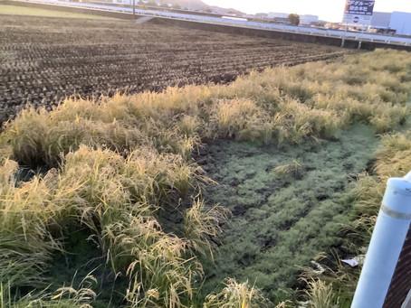 お米収穫しました◎