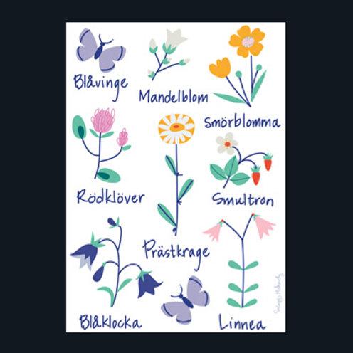 スウェーデンの野の花 (Swedish Wild Flowers)