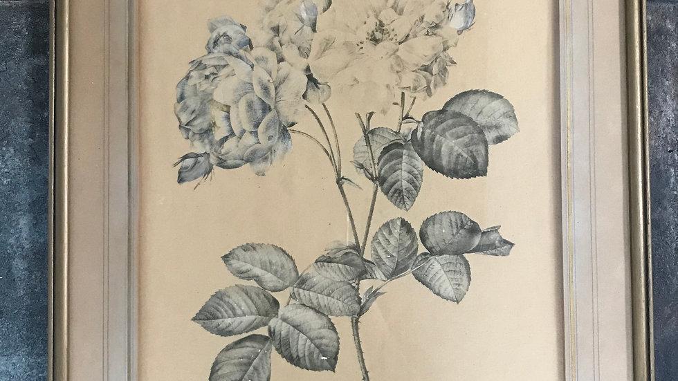 Antique Vintage Gilt Framed Black and White Rose Illustration