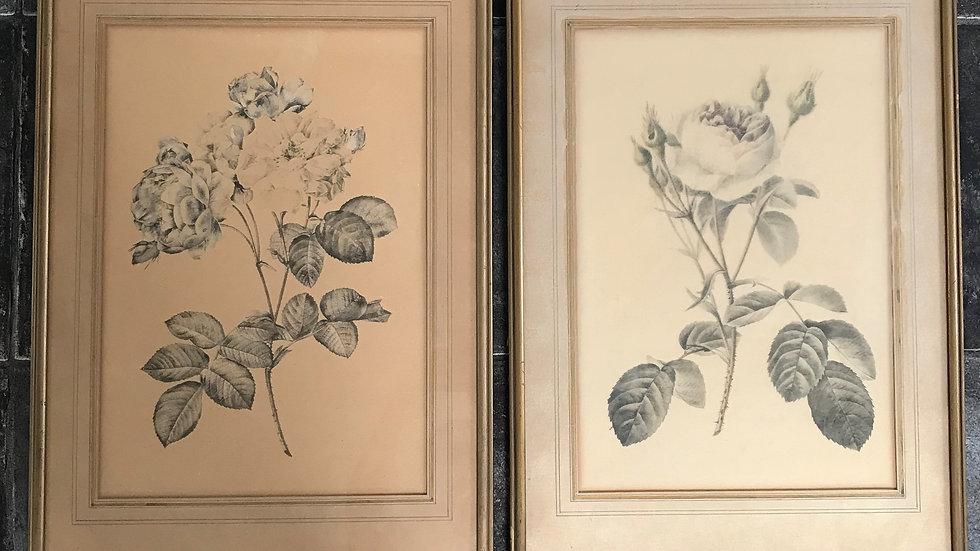 Set of 2 Antique Vintage Gilt Framed Black and White Rose Illustrations PJ Redou