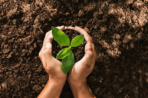 hand-holding-seed-tree-bag-planting-into