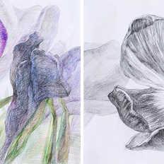 Calamus flower