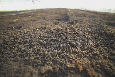 ケール畑と土