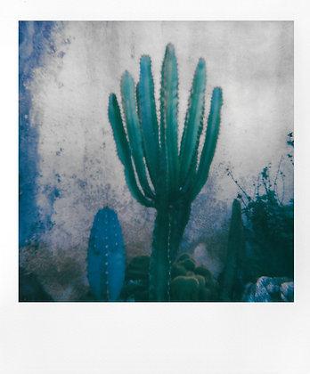Cactus, Sud, France - Exemplaire unique