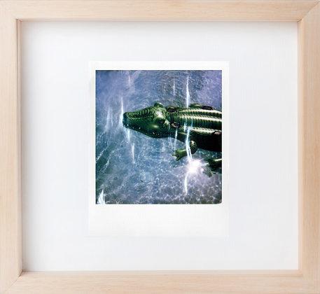 Polaroid 'Dark crocodile'