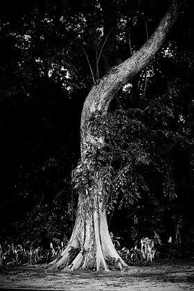 L'arbre, Singapour