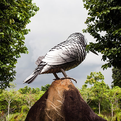 Silver bird, Singapour