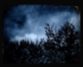 arbres 2.jpg