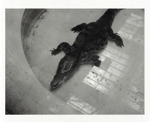 POLAROID LAND 250 - Crocodile